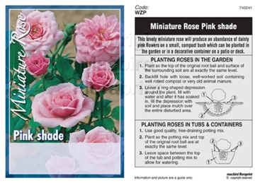 Picture of ROSE MINI PINK SHADE (UNNAMED VARIETY)