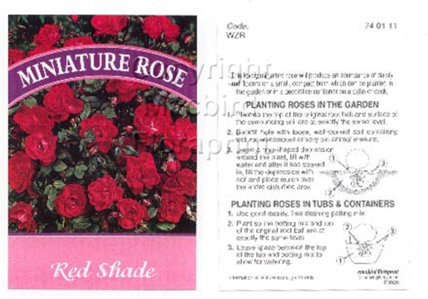 Picture of ROSE MINI RED SHADE (UNNAMED VARIETY)