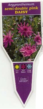 Picture of ARGYRANTHEMUM SEMI DOUBLE PINK DAISY