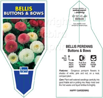 Picture of ANNUAL BELLIS PERENNIS BUTTONS AND BOWS