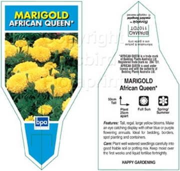 Picture of ANNUAL MARIGOLD AFRICAN QUEEN (Tagetes erecta)