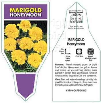 Picture of ANNUAL MARIGOLD HONEYMOON (Tagetes patula)