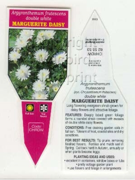 Picture of ARGYRANTHEMUM FRUTESCENS DOUBLE WHITE