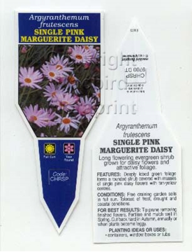 Picture of ARGYRANTHEMUM FRUTESCENS SINGLE PINK