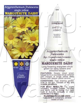 Picture of ARGYRANTHEMUM FRUTESCENS SINGLE YELLOW