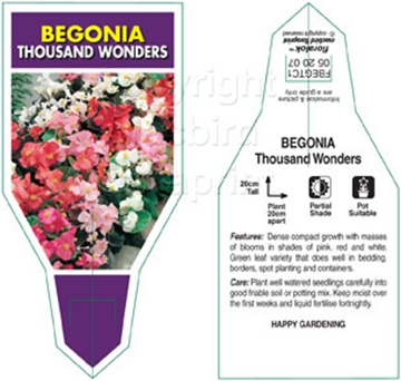 Picture of BEGONIA THOUSAND WONDERS MIXED