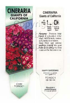 Picture of ANNUAL CINERARIA GIANTS OF CALIFORNIA