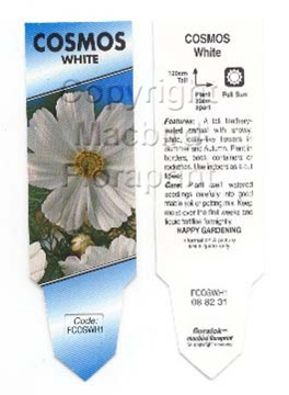 Picture of ANNUAL COSMOS WHITE