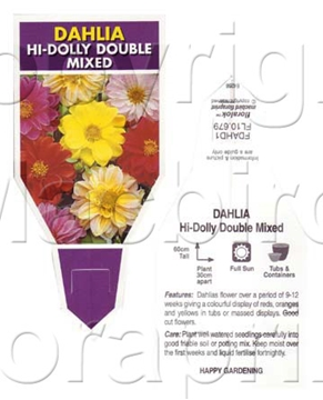 Picture of ANNUAL DAHLIA HI DOLLY DOUBLE MIXED