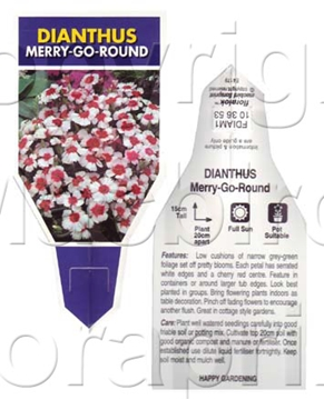 Picture of ANNUAL DIANTHUS MERRY GO ROUND (Dianthus chinensis)