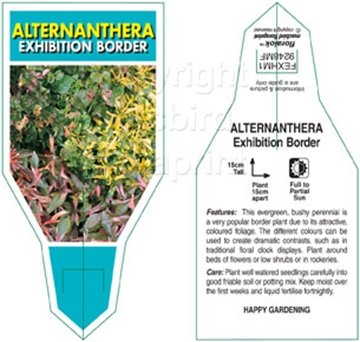 Picture of ALTERNANTHERA EXHIBITION BORDER MIXED