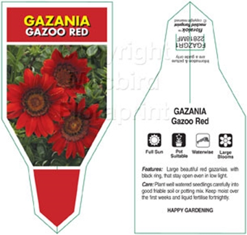 Picture of ANNUAL GAZANIA GAZOO RED