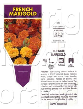 Picture of ANNUAL MARIGOLD FRENCH MIX (Tagetes patula)