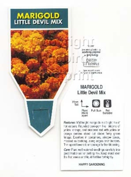 Picture of ANNUAL MARIGOLD LITTLE DEVIL MIX (Tagetes patula)