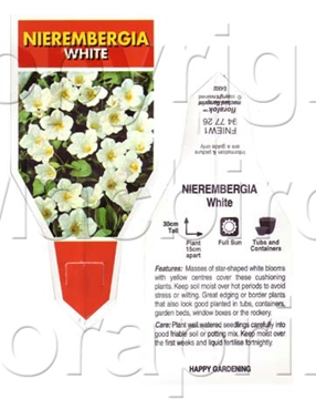 Picture of ANNUAL NIEREMBERGIA WHITE