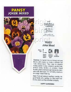 Picture of ANNUAL PANSY JOKER MIXED (Viola x wittrockiana)