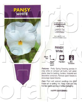 Picture of ANNUAL PANSY WHITE (Viola x wittrockiana)