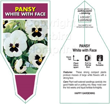 Picture of ANNUAL PANSY WHITE WITH FACE (Viola x wittrockiana)