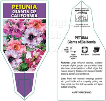 Picture of ANNUAL PETUNIA GIANTS OF CALIFORNIA MIXED (Petunia x hybrida)