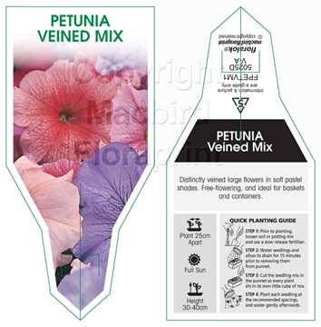 Picture of ANNUAL PETUNIA VEINED MIX (Petunia x hybrida)