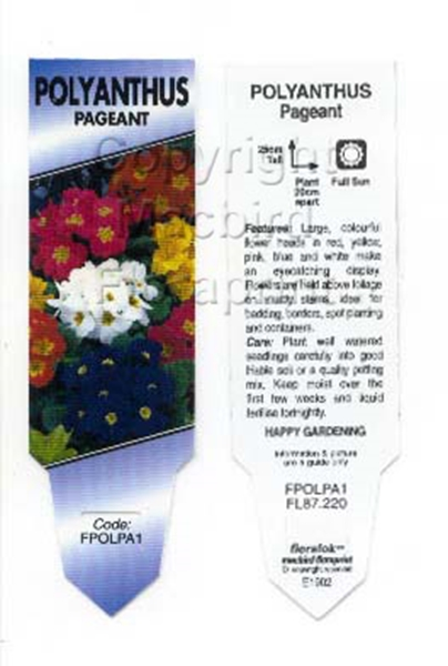 Picture of ANNUAL POLYANTHUS PAGEANT