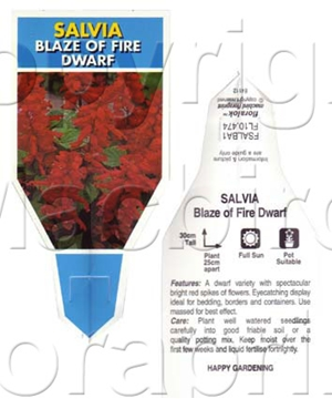 Picture of ANNUAL SALVIA BLAZE OF FIRE DWARF