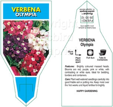 Picture of ANNUAL VERBENA OLYMPIA