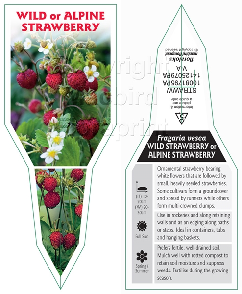 Picture of FRUIT STRAWBERRY WILD OR ALPINE