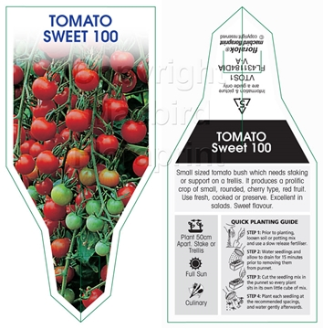 Picture of VEGETABLE TOMATO SWEET 100 (Lycopersicon esculentum)