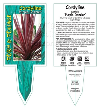 Picture of CORDYLINE PURPLE DAZZLER