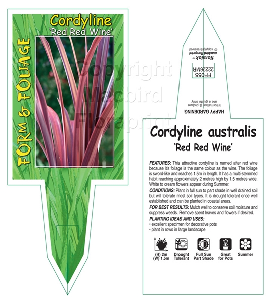 Picture of CORDYLINE AUSTRALIS RED RED WINE