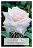 Picture of ROSE ROYAL HIGHNESS (HT)