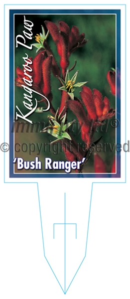 Picture of **ANIGOZANTHOS BUSH RANGER