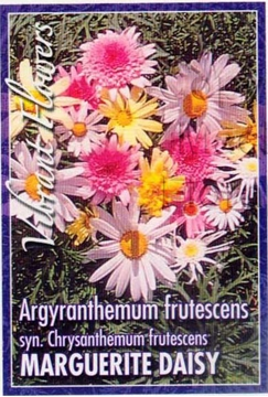 Picture of ARGYRANTHEMUM FRUTESCENS MIXED MARGUERITE DAISY