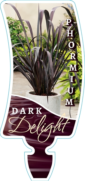 Picture of **PHORMIUM DARK DELIGHT