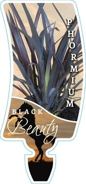 Picture of PHORMIUM BLACK BEAUTY