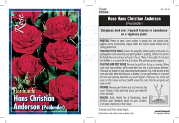 Picture of ROSE HANS CHRISTIAN ANDERSON (FL)