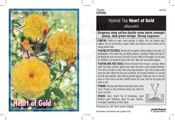 Picture of ROSE HEART OF GOLD (HT)