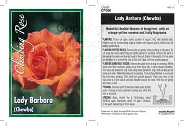 Picture of ROSE LADY BARBARA (CL)