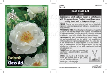 Picture of ROSE CLASS ACT (FL) **NZ CUSTOMERS ONLY**