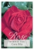 Picture of **ROSE CARA MIA (HT)