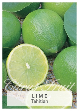 Picture of **FRUIT LIME TAHITIAN