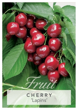 Picture of **FRUIT CHERRY LAPINS Jumbo Tag