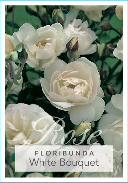 Picture of **ROSE WHITE BOUQUET (FL)