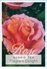 Picture of **ROSE FRAGRANT DELIGHT (HT)
