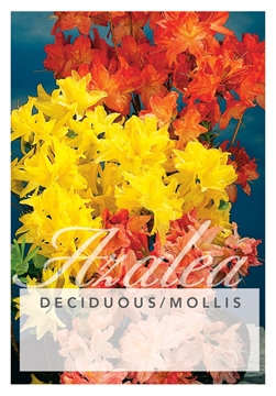 Picture of AZALEA DECIDUOUS/MOLLIS - MIXED PICTURE (UNNAMED V
