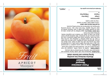 Picture of FRUIT APRICOT MOORPARK