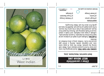 Picture of FRUIT LIME WEST INDIAN