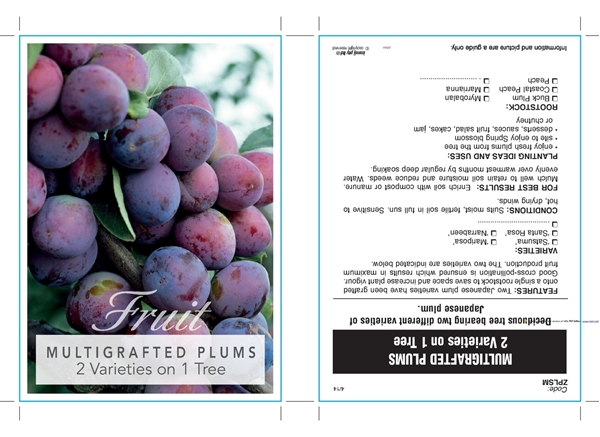 Picture of **FRUIT PLUM MULTIGRAFT 2 ON 1