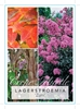 Picture of LAGERSTROEMIA ZUNI
